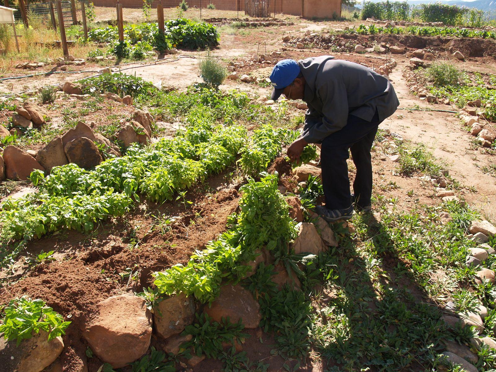 Working in the vegetable garden
